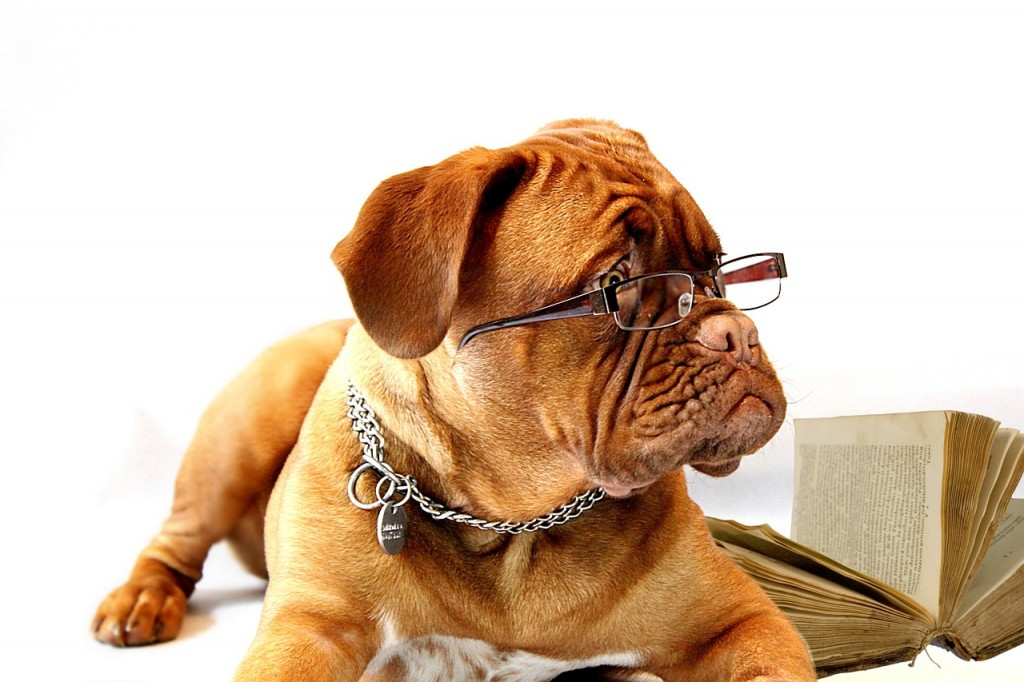 dog- Study Options